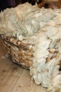 choose a fleece for handspinning